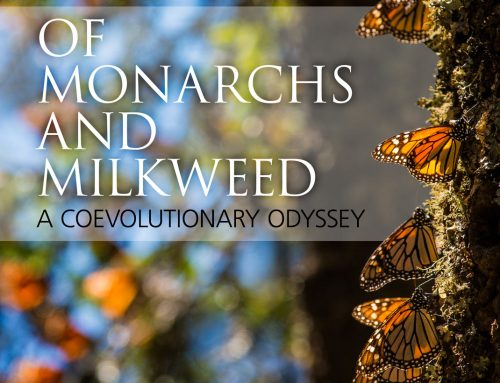 Monarchs Book Cover – Design and Photography